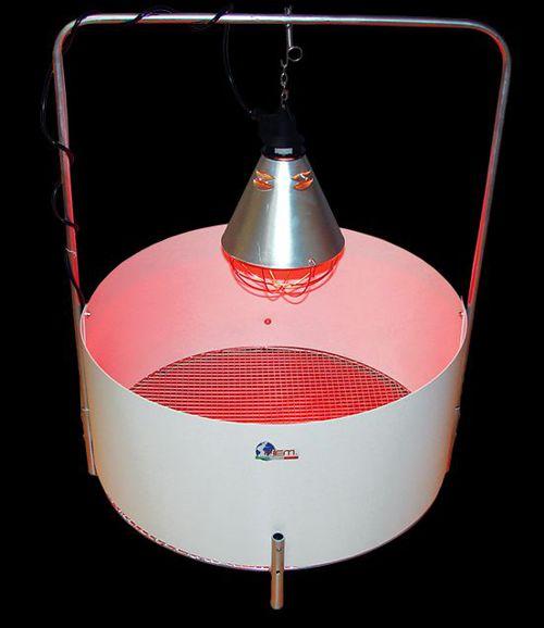 Uova fertili a a a spedizioni dirette for Lampada infrarossi riscaldamento pulcini